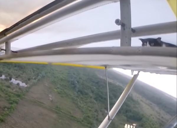 飛行機の翼に居る猫