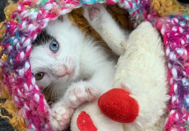水頭症の子猫