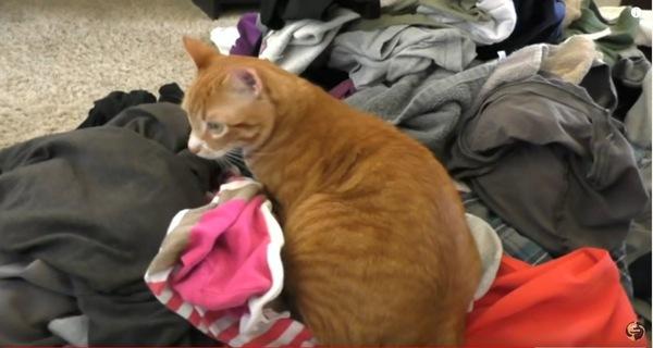 洗濯物に埋もれる猫