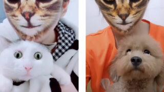 猫に変身した飼い主に驚く犬と猫