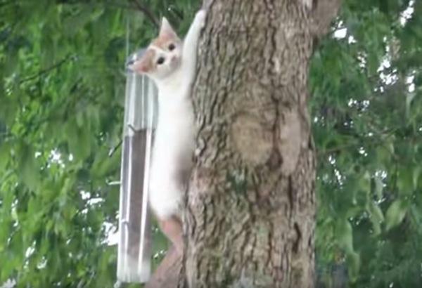 木を降りる子猫