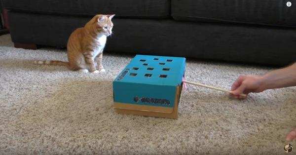 猫と靴箱のおもちゃ