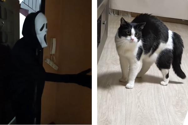 猫とスクリーム