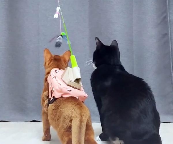 シュールな猫用品