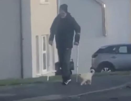 一緒に歩く猫