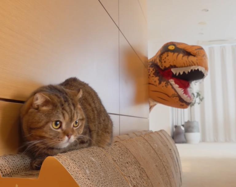 猫とティラノザウルス