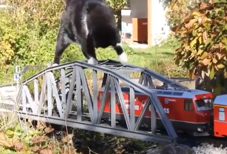 電車と戦う猫