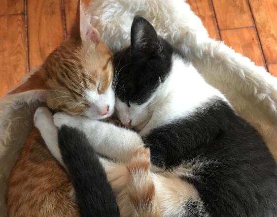 抱き合う2匹の猫