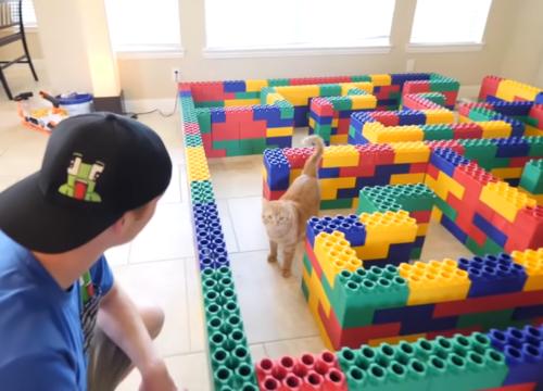 レゴ迷路と猫