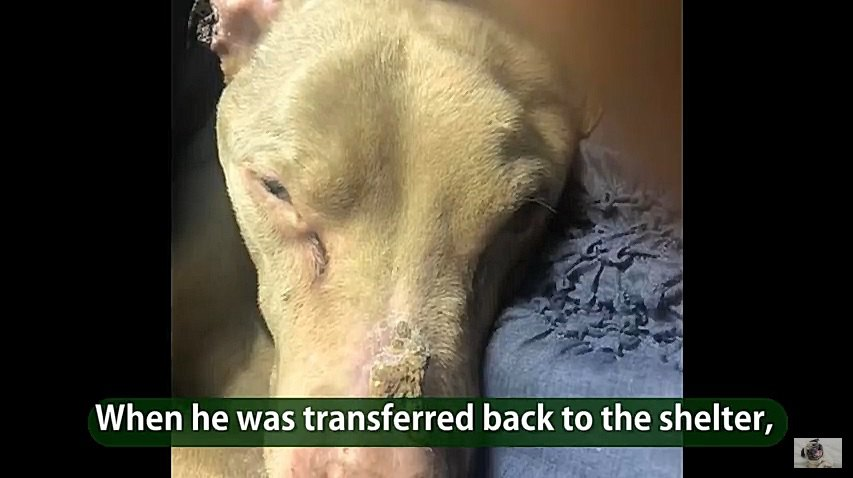 ガンが転移した犬