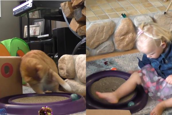猫のおもちゃで遊ぶ幼児