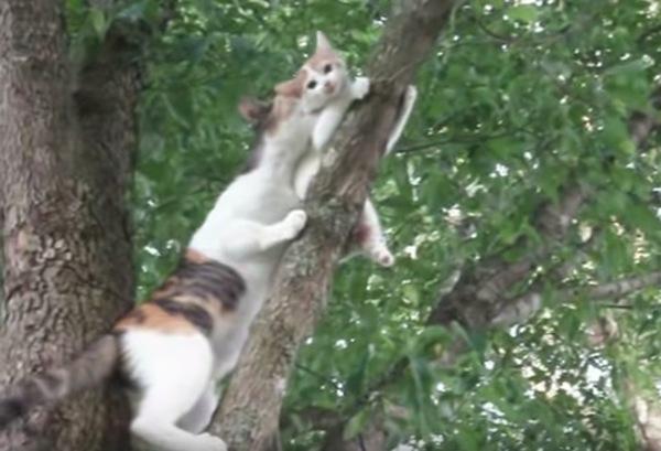 子猫を咥える母猫