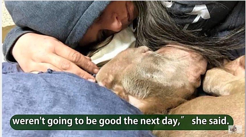 寄り添って眠る犬と女性