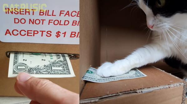 お札を押さえる猫