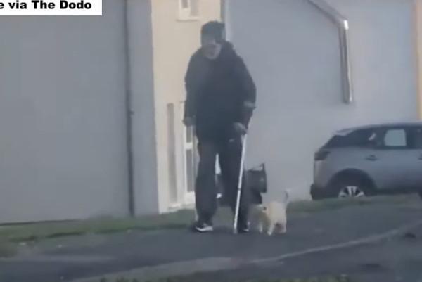 お父さんの隣を一緒に歩く猫