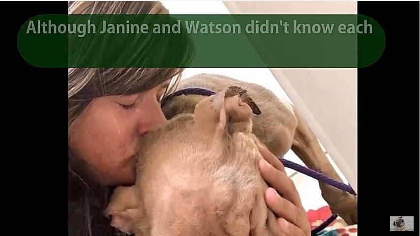犬を抱きしめ涙を流す女性