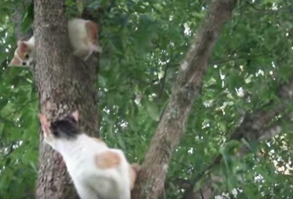 上に登ってしまった子猫