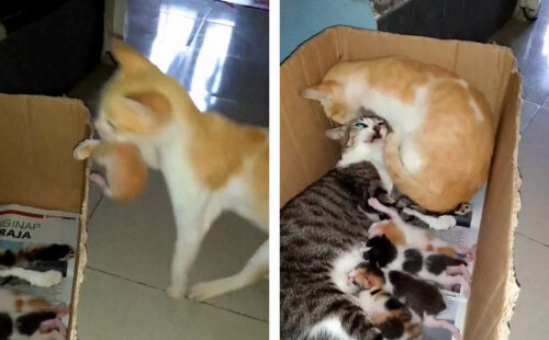 子育てをする父猫