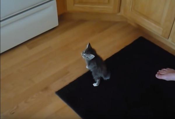 ご飯を探す子猫