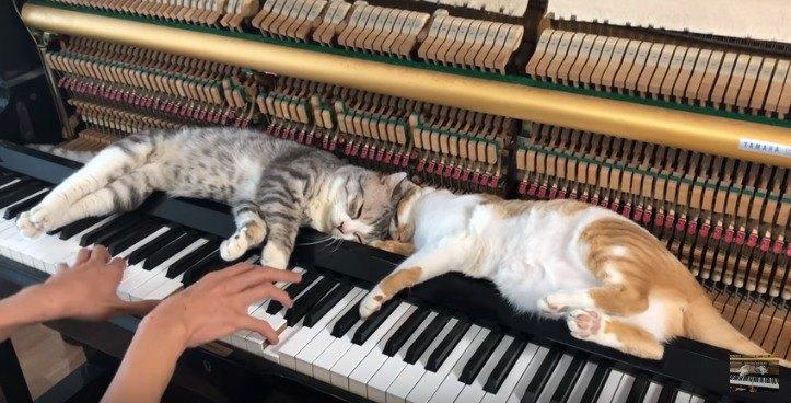 鍵盤の上の隙間で寝る猫