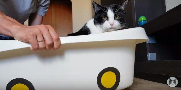 箱から顔を出している猫