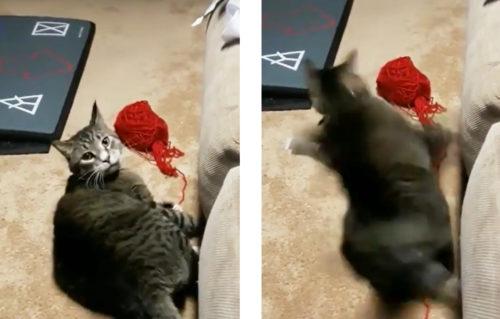 イタズラがバレて驚く猫