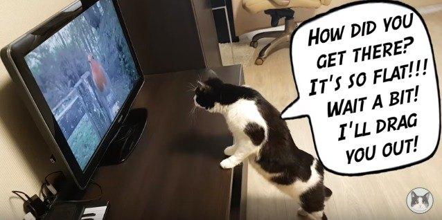 テレビの中の鳥に話しかける猫