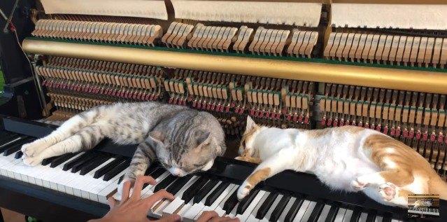 ピアノの上で寝落ちする猫