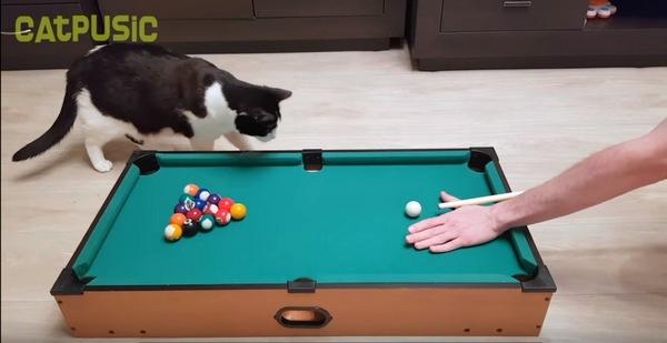 ビリヤード台と猫