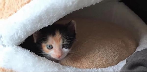 猫用の寝床で寛ぐ子猫