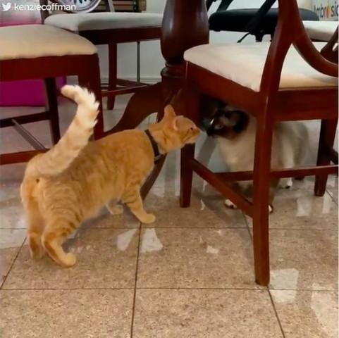 2引きの猫のご対面