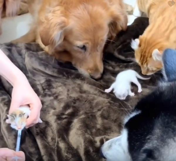 子猫を見守る犬たち