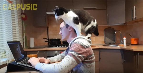 飼い主の方に乗る猫