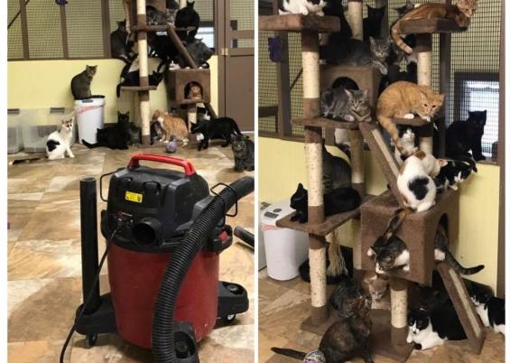 掃除機から逃れる猫