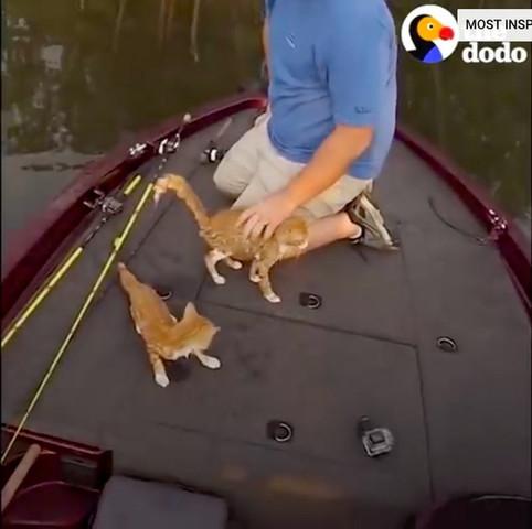 船の上で救助された2匹の子猫