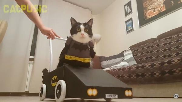 バッドモービルに乗る猫