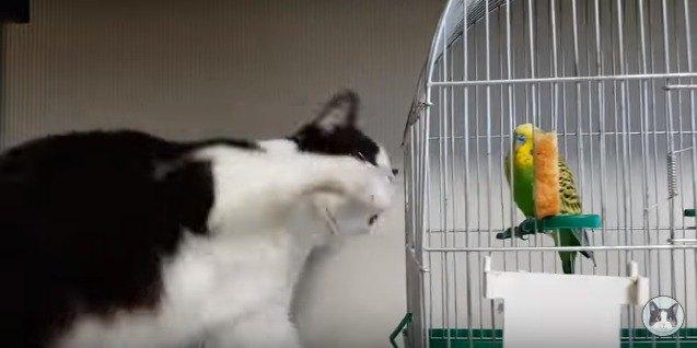 鳥かごに猫パンチする猫