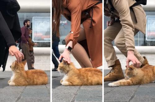 トルコの人達と猫