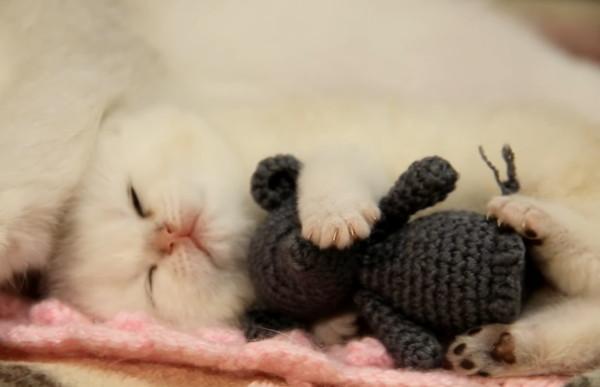 ネズミのぬいぐるみを抱っこしながら寝る子猫