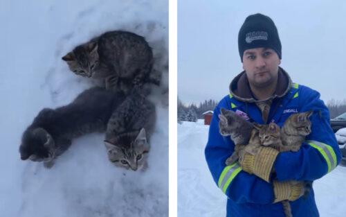 凍りついた子猫と救助した男性