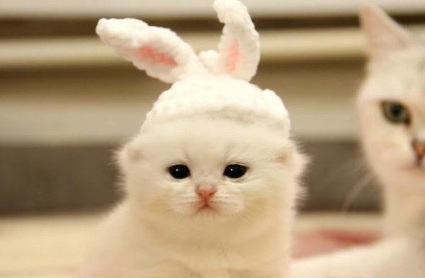 ウサギのコスプレをした子猫