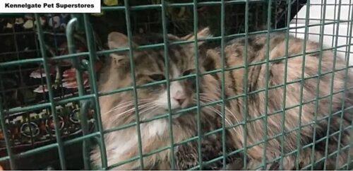 ペットフード工場で捕まった猫