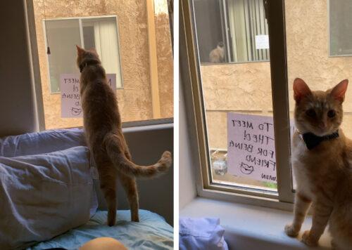文通しあう猫
