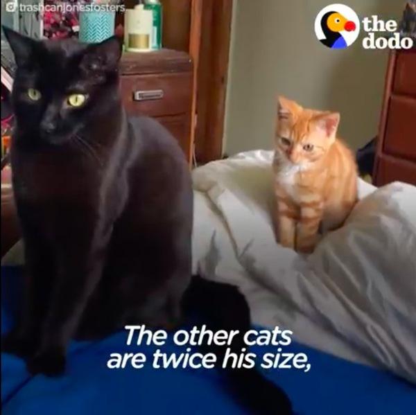 先輩猫と小人症の猫