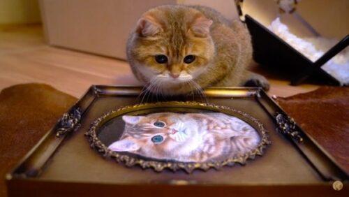 肖像画を見るホシコ
