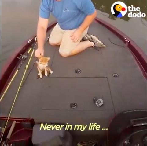 船の上で鳴く子猫