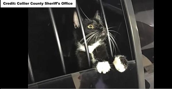 パトカーに乗る猫