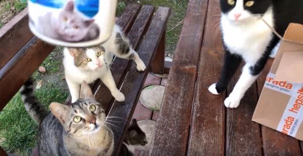 猫缶を見つめる猫たち
