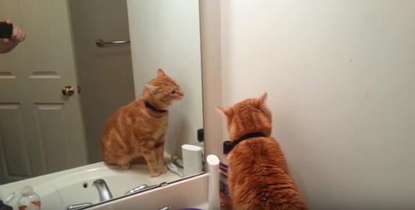 鏡に映る自分が気になる猫