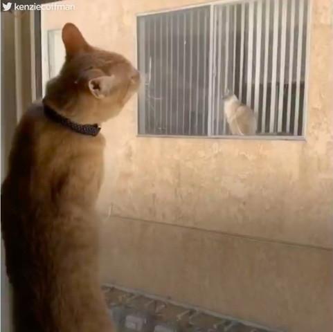 窓越しの二匹